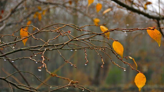 Prognoza pogody na dzisiaj: miejscami deszcz i silny wiatr. W górach śnieg
